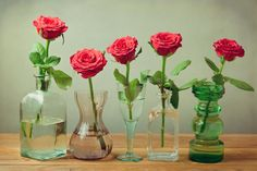 To prolong the life of fresh-cut flowers, florists recommend commercial flower preservatives. Homemade vase solutions — using pennies, aspirin, vodka, sugar, 7-UP or bleach — claim to be as good or better. Do any of them work?