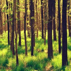 Forest. Reminds me of my childhood...I loved playing in the forest!