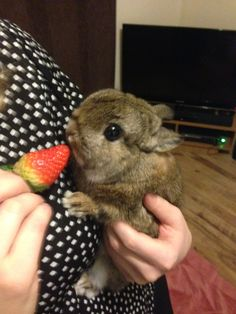 Valentines Day strawberry for my baby x