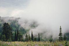 celeritious: mist and meadows and mt. rainier by Danielle ...