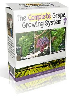 The Complete Grape Growing System Nail Swag, Grape Plant, Growing Grapes, Bottle Carrier, Grow Your Own, Wine Making, Hydroponics, Horticulture, Grape Vines