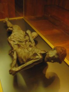 This bog body, known as Grauballe Man, was disovered in 1952 from a peat bog by a team of Danish peat cutters near the village of Grauballe, Denmark.
