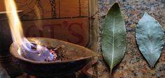 Les feuilles de laurier sont un ingrédient très apprécié en cuisine. Découvrez leurs vertus santé et leur effet magique sur votre niveau de stress. Cockroach Repellent, Voici, Healing Herbs, Natural Healing, Natural Remedies, Herbal Remedies, Roach Remedies, Health Remedies, Herbal Medicine