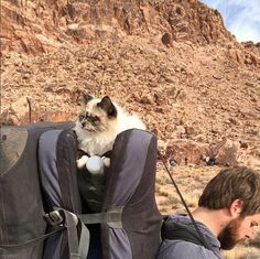 Learn how to take your cat on an excellent adventure.