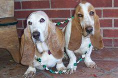 Luck o' Irish Loretta & Gracie