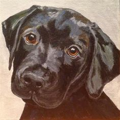 Mind Blowing Facts About Labrador Retrievers And Ideas. Amazing Facts About Labrador Retrievers And Ideas. Black Labs, Black Labrador, Black Lab Puppies, Corgi Puppies, Labrador Retriever Dog, Dog Portraits, Animal Photography, Equine Photography, Animal Paintings