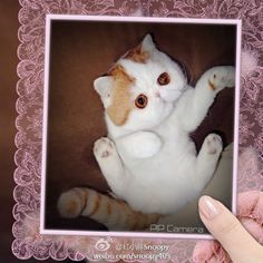 weibo.com/snoopy409 Snoopy Cat, Habitats, Cat Lovers, Cool Photos, Dog Cat, Kitty, Puppies, Pets, Cats