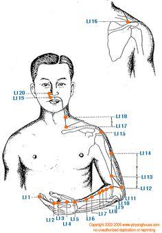(LI) Large Intestine Meridian - Graphic | Yin Yang House