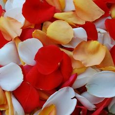 Orange Creamsicle Wholesale Rose Petals | FiftyFlowers.com - 6000 petals for $139; 12,000 for $199