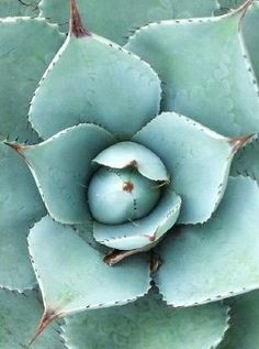 Cacti And Succulents, Planting Succulents, Planting Flowers, Agaves, Cactus E Suculentas, Cactus Plante, Image Deco, Belle Photo, Mother Nature