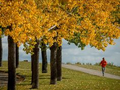 Weather Network forecasts warm fall with 'roller coaster' swings for Calgary Warm Autumn, Fall, Weather Network, Roller Coaster, Swings, Calgary, Restoration, Country Roads, Plants