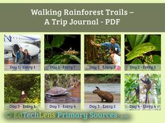 Check out a free attention-getting introduction to primary sources for primary students: Walking Rainforest Trails. NGSS- and ELA-aligned, includes discussion questions. Rainforest Theme, Virtual Field Trips, Primary Sources, Life Science, Trail, Walking, Learning, Students, Journey