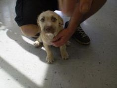 Inverness, FL - Terrier (Unknown Type, Small) Mix. Meet Stray-Carnegie Dr-Avail 10/5, a dog for adoption. https://www.adoptapet.com/pet/19480200-inverness-florida-terrier-unknown-type-small-mix