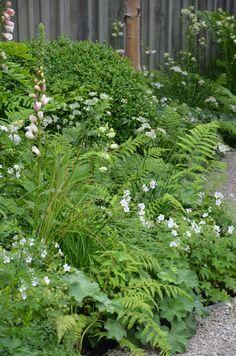Fern, Foxglove, Lady's Mantle, white Geranium, Astrantia.