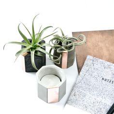 http://www.pasinga.com/concrete/bowls-planter/concrete-copper-cups/