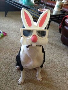BT as Easter bunny