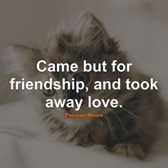 Top 100 quotes about friendship photos #Friendship #Quotes #Quote #FriendshipQuotes #QuotesAboutFriendship #FriendshipQuote #QuoteAboutFriendship #Love See more http://wumann.com/top-100-quotes-about-friendship-photos/