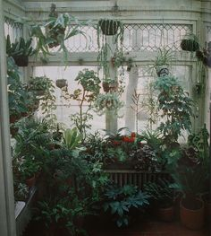 An indoor jungle of greenery! Deco Nature, Room With Plants, Plants Are Friends, Green Rooms, Tropical Plants, Indoor Plants, Indoor Gardening, Hanging Plants, Indoor Greenhouse