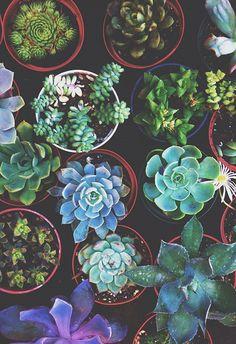 Pretty succulents.