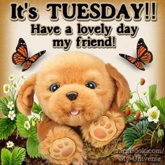 It's Tuesday! Have a lovely day my friend! It's Tuesday! Have a lovely day my friend! Good Morning My Friend, Good Morning Good Night, Day For Night, Good Morning Quotes, Happy Tuesday Morning, Happy Tuesday Quotes, Tuesday Humor, Happy Weekend, Thursday