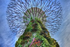 I made and uploaded photo of a Supertree at Gardens by the Bay a few weeks back. This is another one.