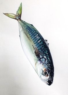 Watercolor Fish, Watercolor Paintings, Fish Paintings, Food Art Painting, Guache, A Level Art, Food Drawing, Marker Art, Fish Art