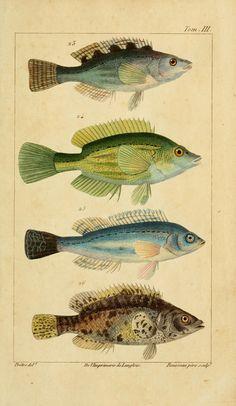 t.3 (1826) - Histoire naturelle des principales productions de l'Europe…