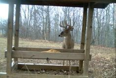 Supplemental feeding has a long list of benefits for your deer herd, but putting the extra time and money into feeding protein pellets, corn or other grains can quickly go to waste if you can't keep it dry. This is a simple, but very effective free-choice feeder you can build on your own that will provide many years of service.