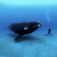 Meeting of the minds. Amazing capture by @BrianSkerry.