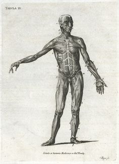 Print showing the muscles of the human body, Europe, 1851-1860