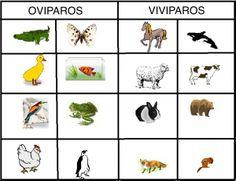 Animales Oviparos - Todo sobre los animales oviparos, imagenes, listas, ejemplos y mas…
