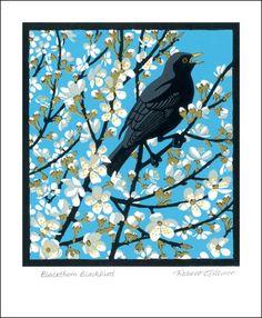 'Blackthorn Blackbird' by Robert Gillmor (A552) (NEW)