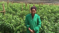 Julia, who does not want to give her last name, recently left a role on a farm nearby after she refused to have sex with her male supervisor. She is hopeful that her new job on a farm certified by Fairtrade International will offer more protection. Women's Rights, New Job, Feminism, Women Rights