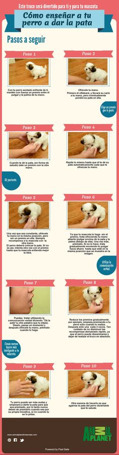 Make one special photo charms for your pets, compatible with your Pandora bracelets. Cómo entrenar a tu mascota Puppy Care, Dog Care, Shih Tzu, I Love Dogs, Cute Dogs, Animals And Pets, Cute Animals, Dog Accesories, Baby Dogs