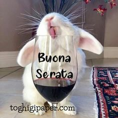 Wine Glass, Animation, Animals, Facebook Instagram, Night, March, Woman, Flowers, Bonjour