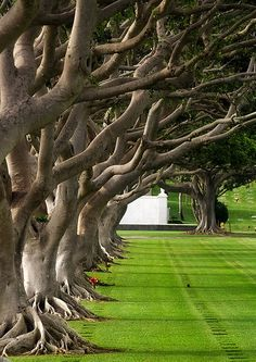 Punch Bowl National Cemetery, Oahu, Hawaii by fj40troutbum, via Flickr