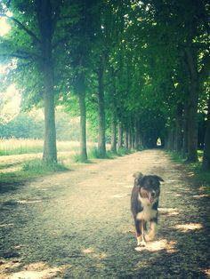 En promenade!