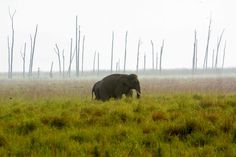 Dhikala grassland is just one of the attraction in #CorbettNationalPark. Thought of showing this to those who have not visited Dhikala.