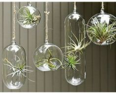 I bought two of these but I have yet to make them. I think they'd be prettier with some dirt n rocks. I'll get there?