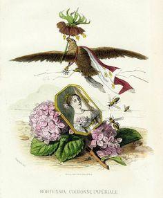 Сорт гортензии под названием Рябчик императорский или Царская корона. На портрете - Гортензия де Богарне, мать Наполеона III