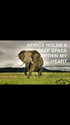 Africa has it all... Let's look after it