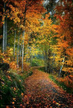 Hello October                                                                                                                                                      More