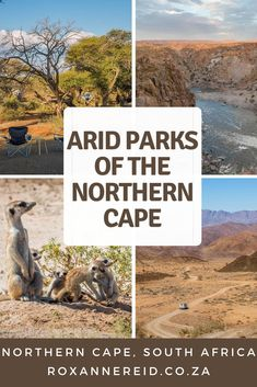 Why to visit the arid parks of the Northern Cape, South Africa - Richtersveld, Augrabies, Kgalagadi or Kalahari, Mokala and Namqualand - Roxanne Reid