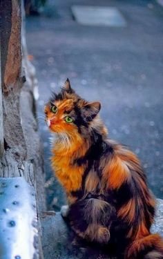 Have you ever seen a more exquisite cat? ❤
