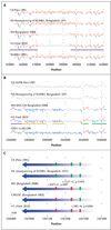 Cuando se mapeó la lectura de secuencias sin procesar a la referencia N16961 canónica, se identificó la variación del número de copias - por lo general en las regiones genómicas hiper-recombinante - que afecta a los ARN ribosómicos, el superintegrón V. cholerae, el elemento SXT integrador y conjugativo y el genómico septépandémico Islas (VSP-1 y VSP-2). Los cinco aislamientos mostraron un alto grado de similitud, así como notable variación estructural (Fig. 1). Las estructuras de los genomas…