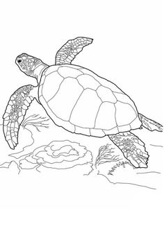 19 Best Sea Turtle Drawing Images Turtle Coloring Pages Turtle