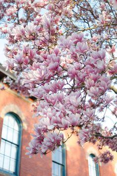 Christine Chitnis: Blooms