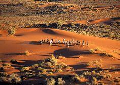 Kalahari desert.  Пустыня Калахари занимает 8% территории всего Африканского континента. Она занимает часть территории ЮАР, Намибии и практически полностью покрывает Ботсвану.
