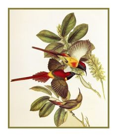 Fire Tailed Sunbirds by Naturalist John Gould Birds Counted Cross Stitch or Counted Needlepoint Pattern