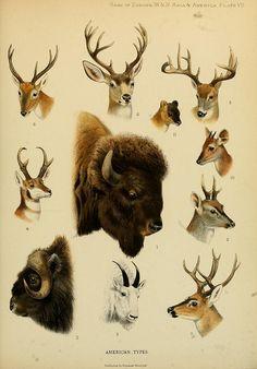 ilustración realista de animales